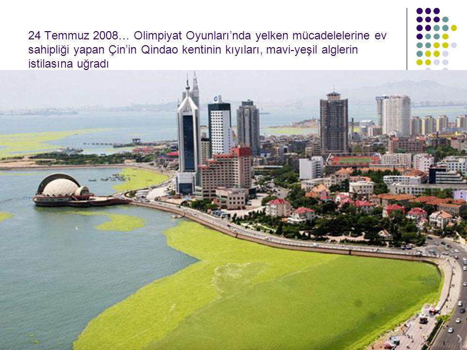 24 Temmuz 2008… Olimpiyat Oyunları'nda yelken mücadelelerine ev sahipliği yapan Çin'in Qindao kentinin kıyıları, mavi-yeşil alglerin istilasına uğradı