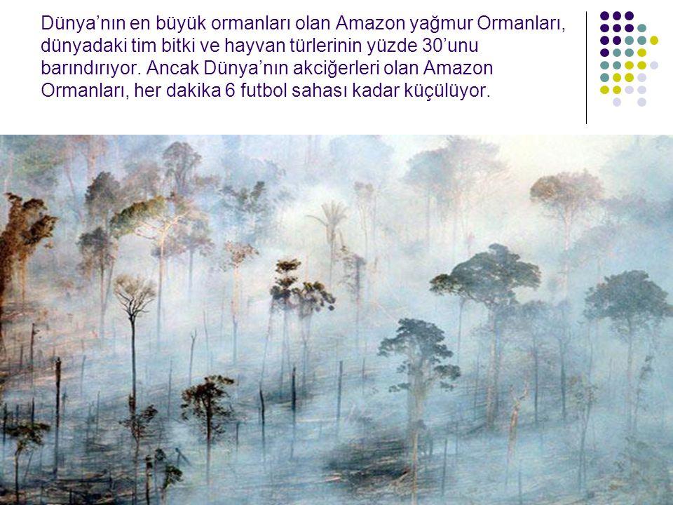 Dünya'nın en büyük ormanları olan Amazon yağmur Ormanları, dünyadaki tim bitki ve hayvan türlerinin yüzde 30'unu barındırıyor.