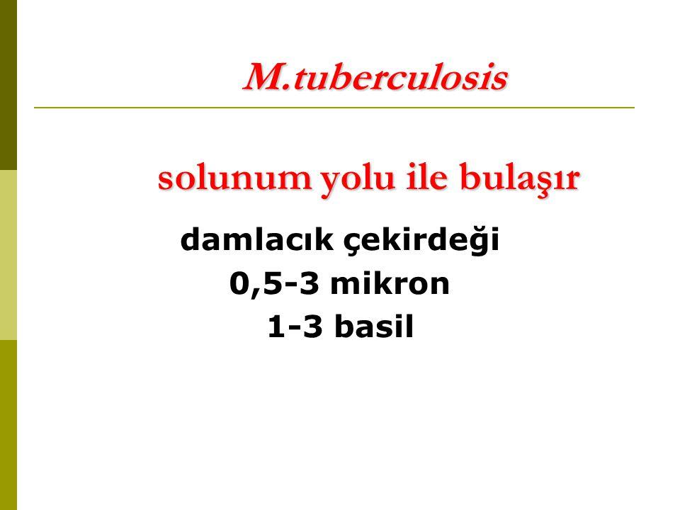 M.tuberculosis solunum yolu ile bulaşır