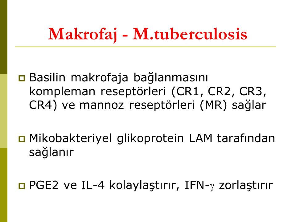 Makrofaj - M.tuberculosis