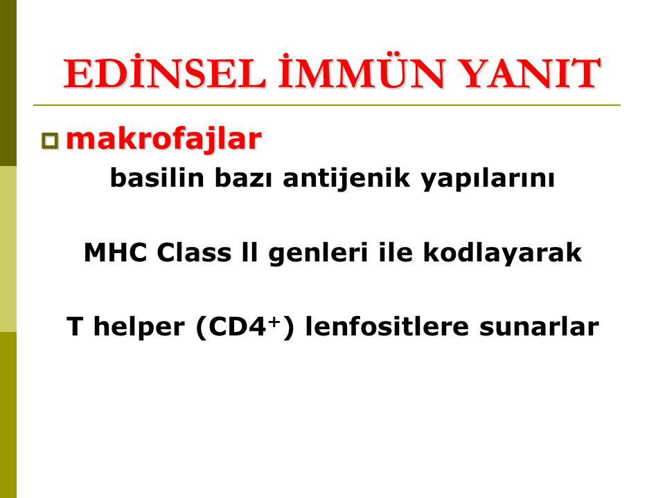 basilin bazı antijenik yapılarını MHC Class ll genleri ile kodlayarak