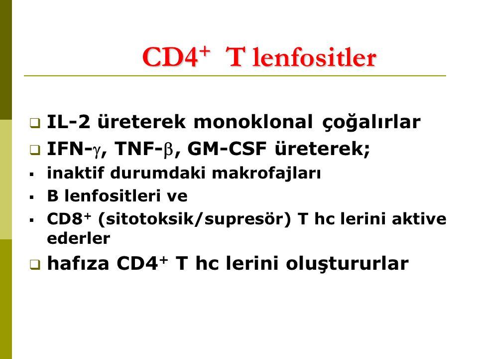 CD4+ T lenfositler IL-2 üreterek monoklonal çoğalırlar