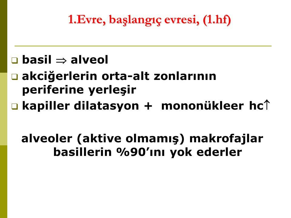 1.Evre, başlangıç evresi, (1.hf)