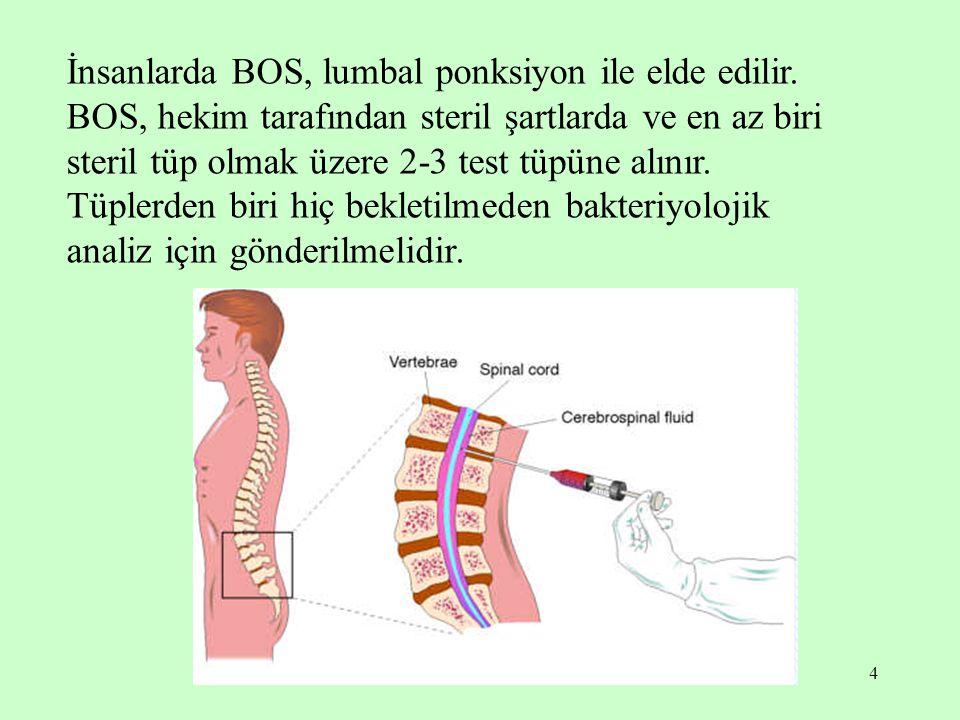 İnsanlarda BOS, lumbal ponksiyon ile elde edilir