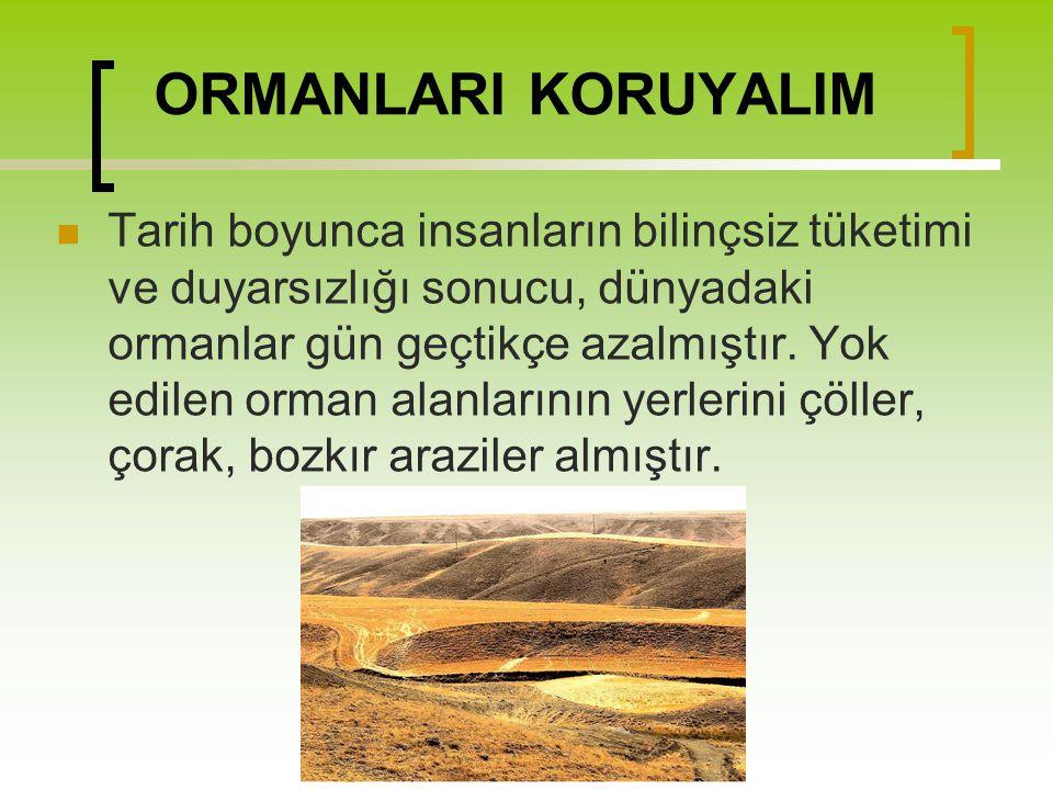 ORMANLARI KORUYALIM