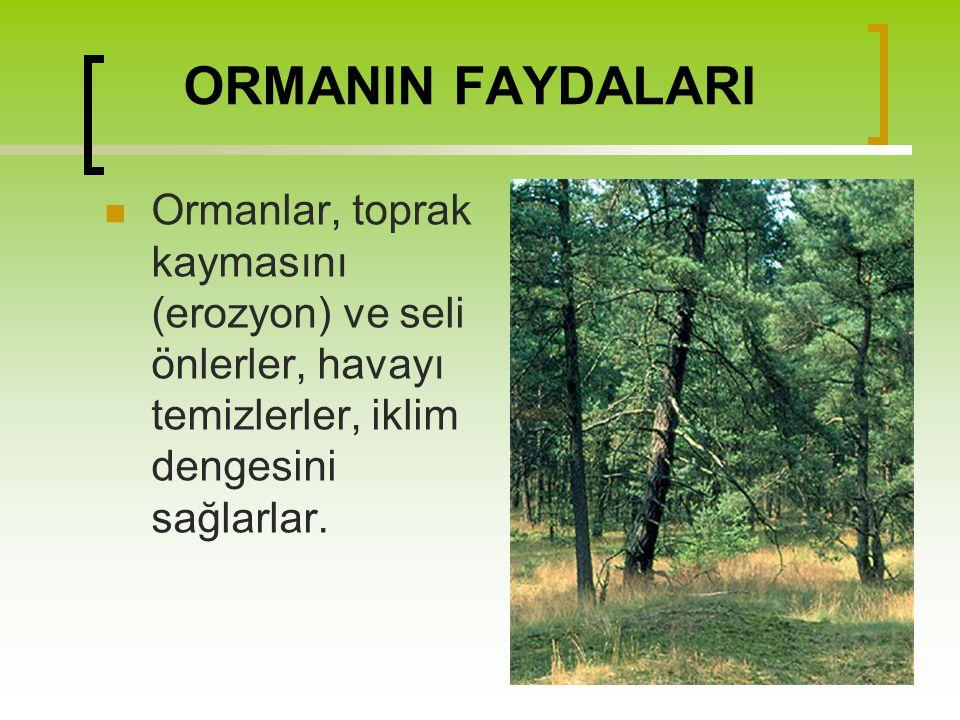 ORMANIN FAYDALARI Ormanlar, toprak kaymasını (erozyon) ve seli önlerler, havayı temizlerler, iklim dengesini sağlarlar.