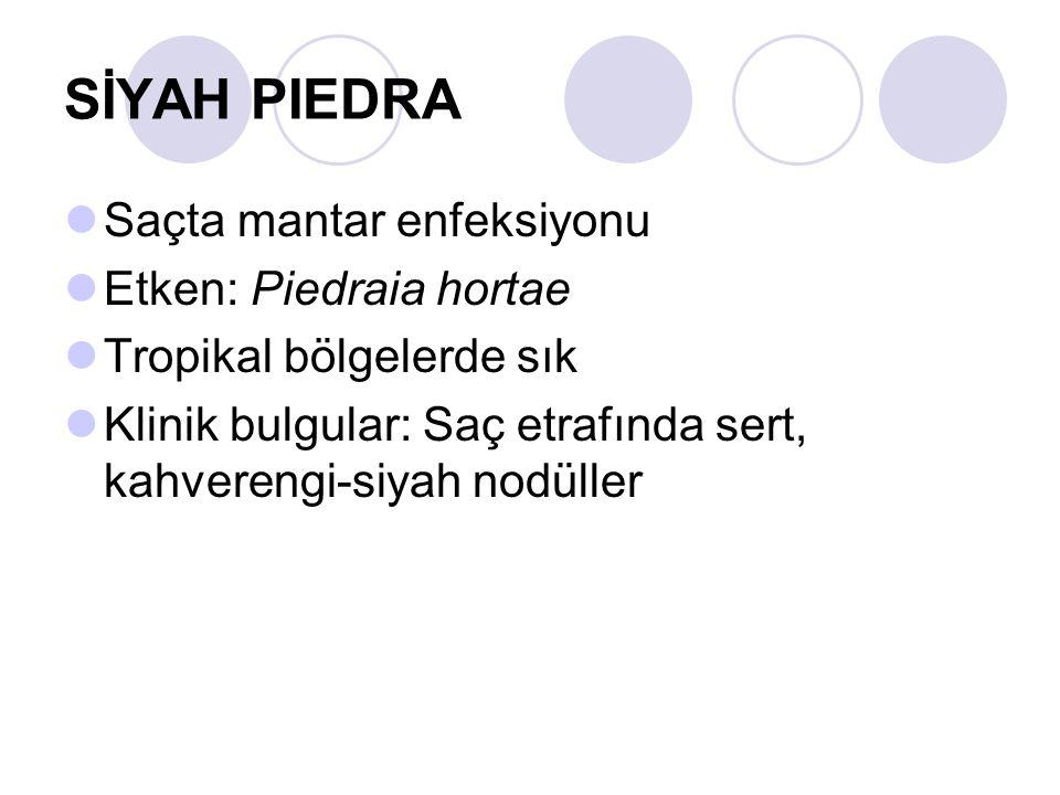 SİYAH PIEDRA Saçta mantar enfeksiyonu Etken: Piedraia hortae
