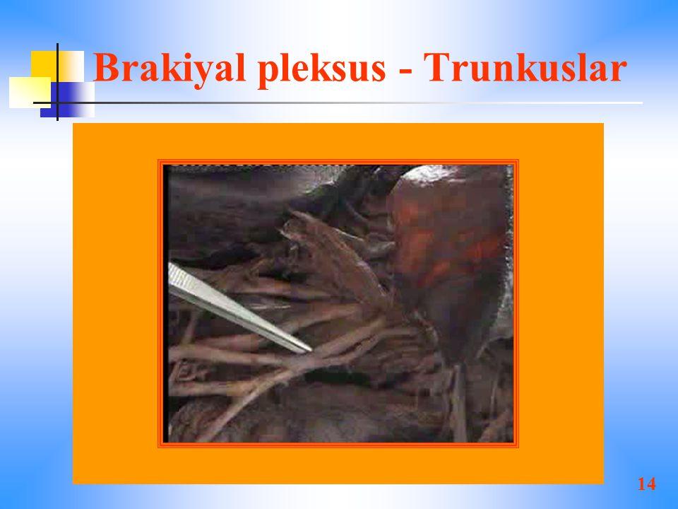 Brakiyal pleksus - Trunkuslar