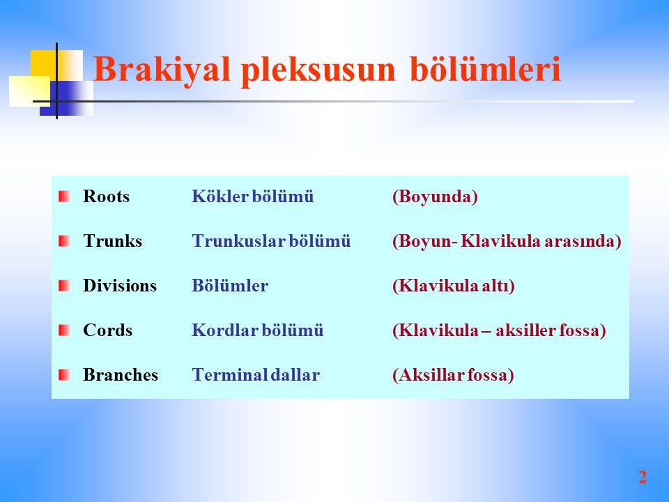 Brakiyal pleksusun bölümleri