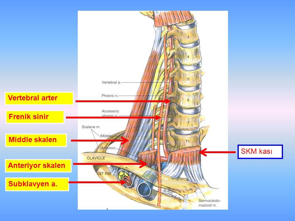 Vertebral arter Frenik sinir Anteriyor skalen Middle skalen Subklavyen a. SKM kası