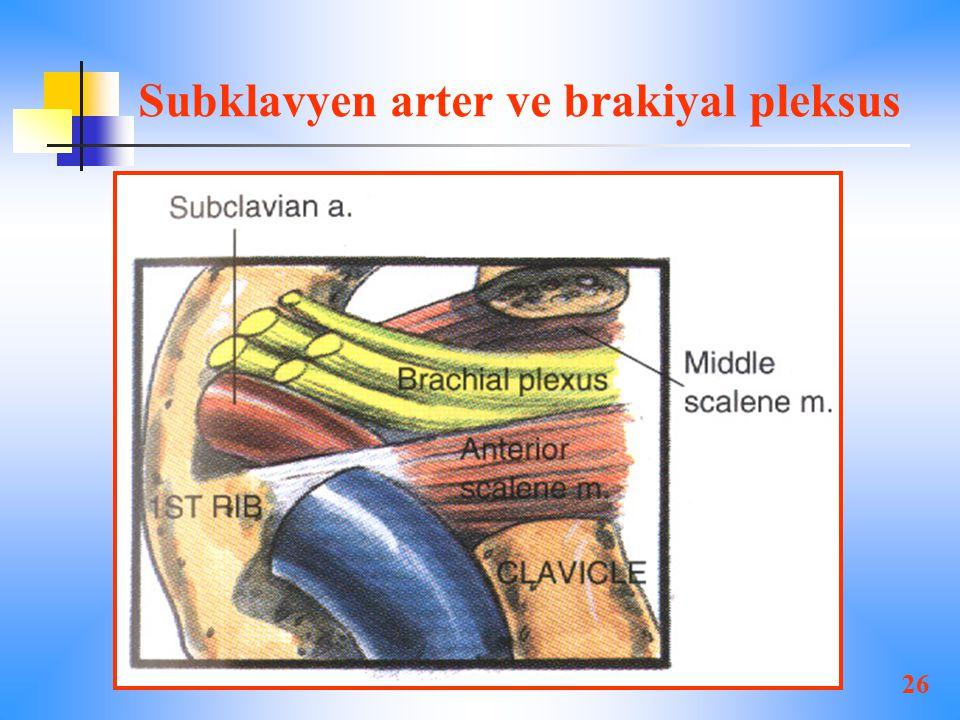Subklavyen arter ve brakiyal pleksus