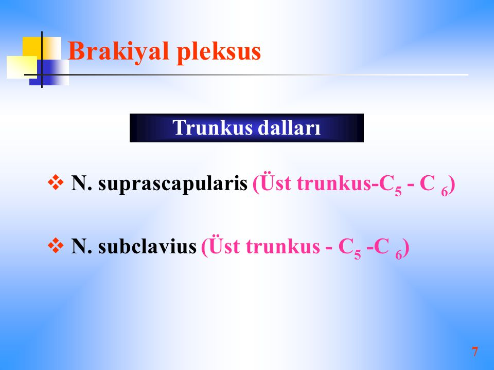 Brakiyal pleksus Trunkus dalları