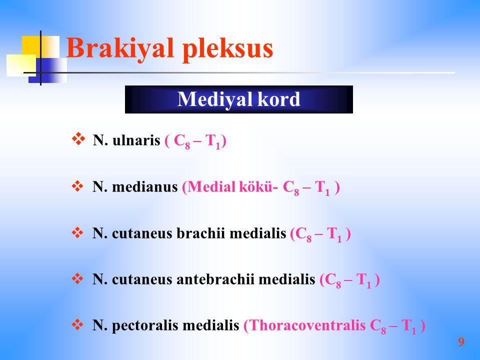 Brakiyal pleksus Mediyal kord N. ulnaris ( C8 – T1)