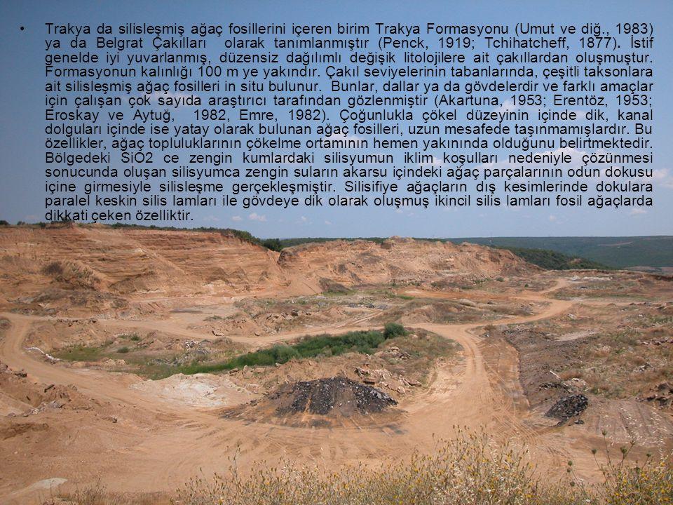 Trakya da silisleşmiş ağaç fosillerini içeren birim Trakya Formasyonu (Umut ve diğ., 1983) ya da Belgrat Çakılları olarak tanımlanmıştır (Penck, 1919; Tchihatcheff, 1877).