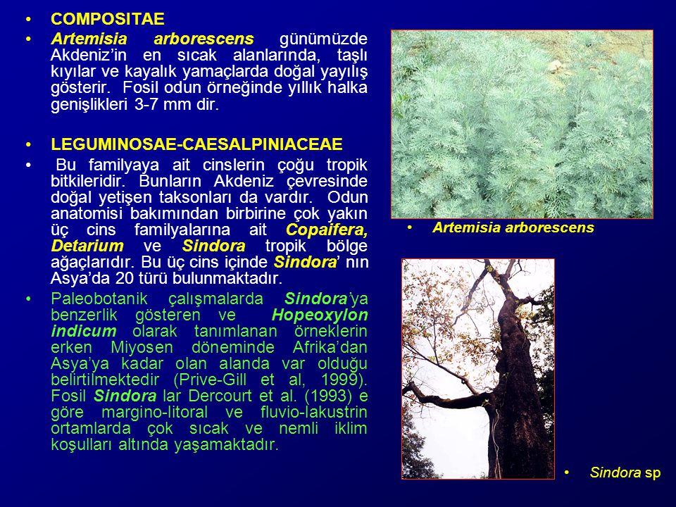 LEGUMINOSAE-CAESALPINIACEAE