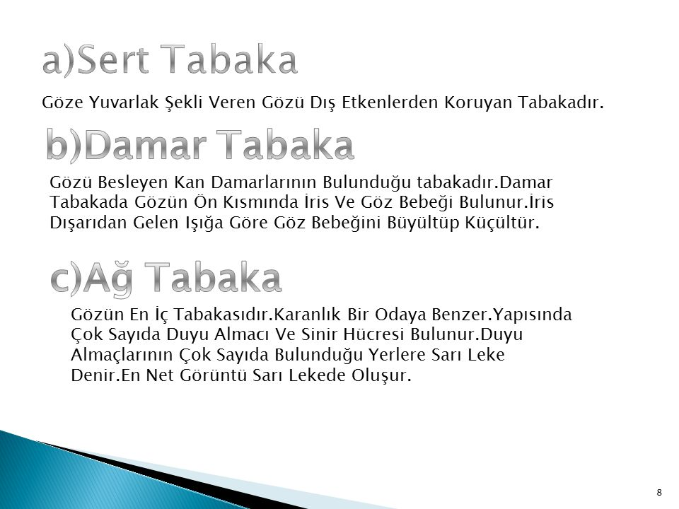 a)Sert Tabaka b)Damar Tabaka c)Ağ Tabaka