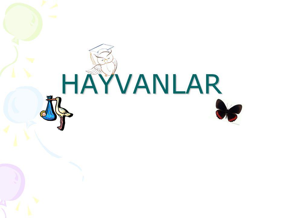 HAYVANLAR