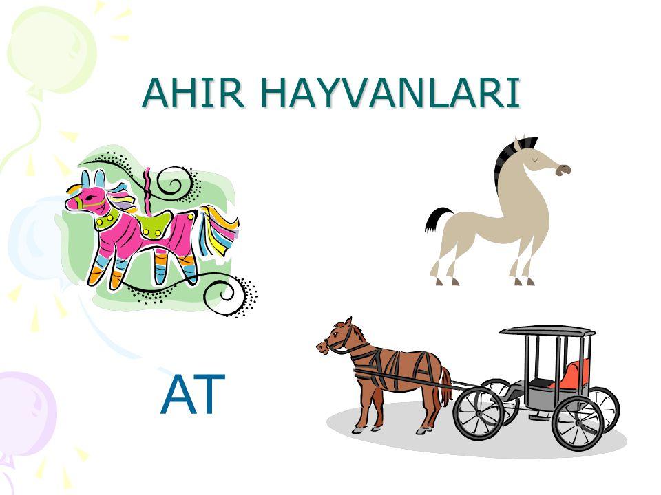 AHIR HAYVANLARI AT