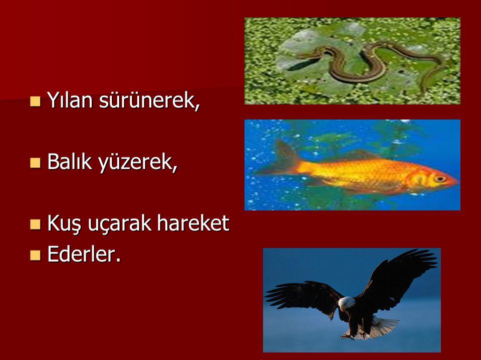 Yılan sürünerek, Balık yüzerek, Kuş uçarak hareket Ederler.