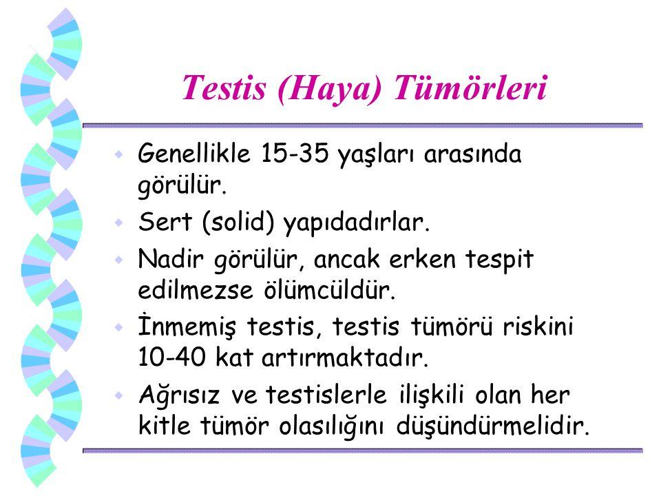 Testis (Haya) Tümörleri