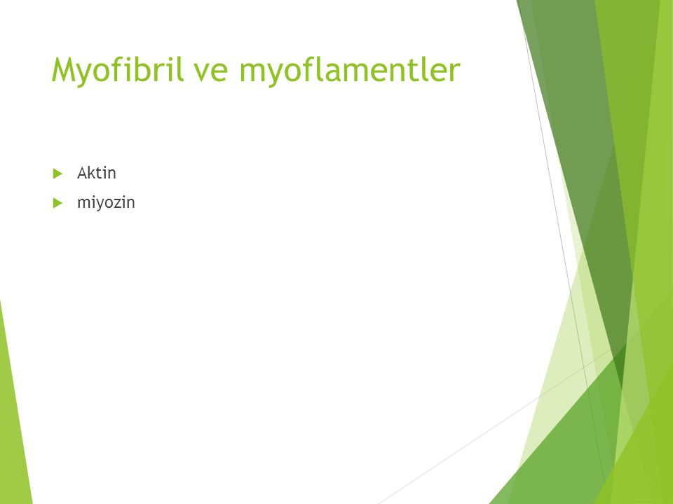 Myofibril ve myoflamentler