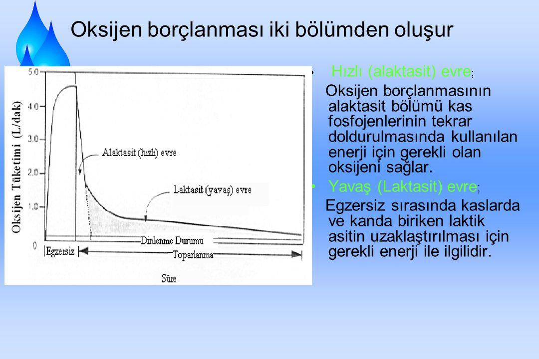 Oksijen borçlanması iki bölümden oluşur