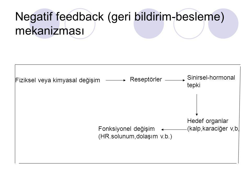 Negatif feedback (geri bildirim-besleme) mekanizması