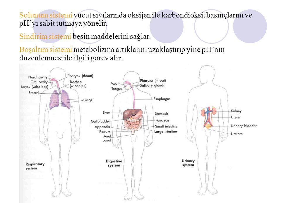 Solunum sistemi vücut sıvılarında oksijen ile karbondioksit basınçlarını ve pH'yı sabit tutmaya yönelir.