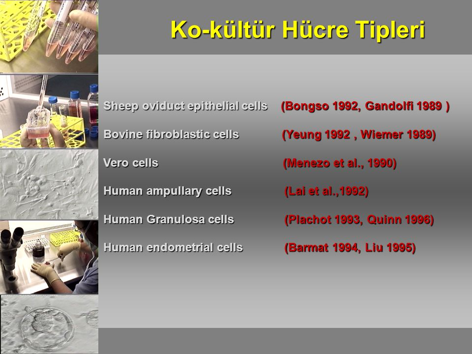 Ko-kültür Hücre Tipleri