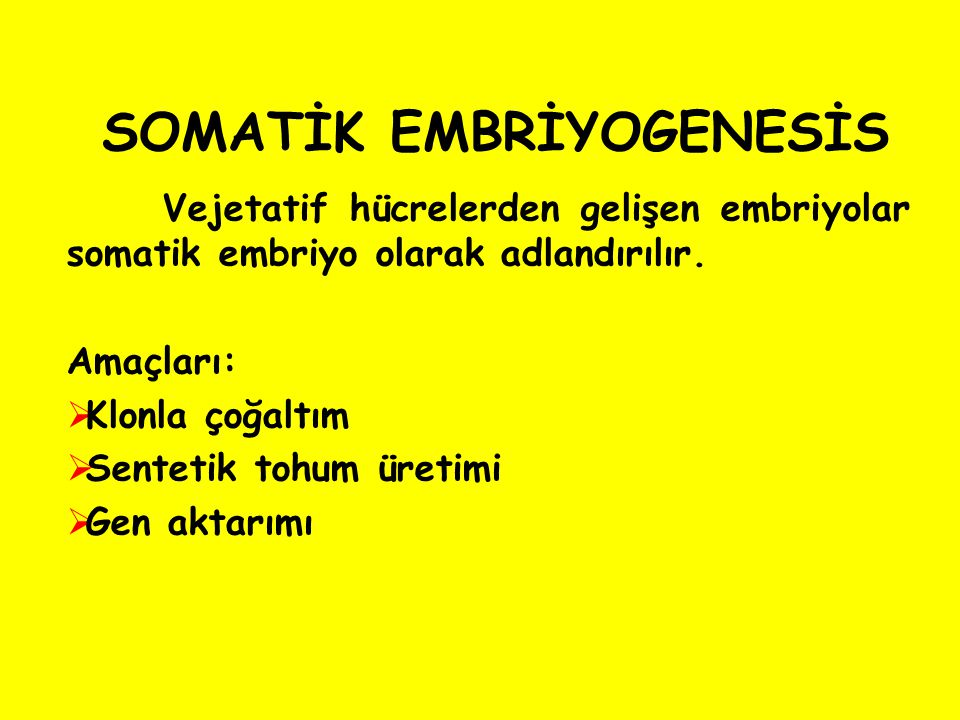 SOMATİK EMBRİYOGENESİS