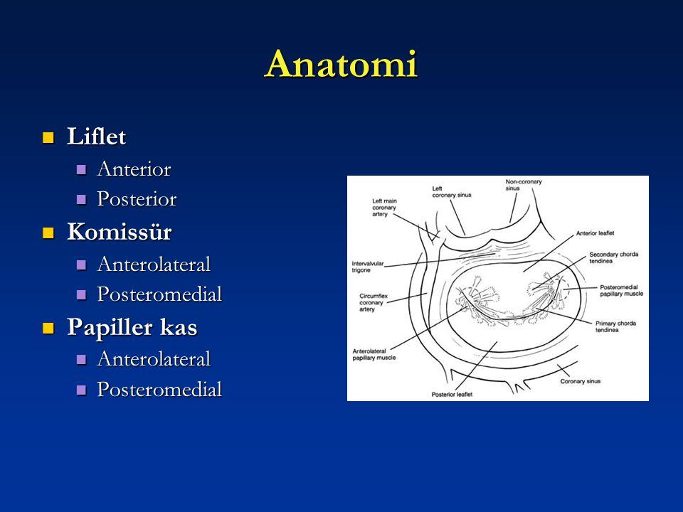 Anatomi Liflet Komissür Papiller kas Anterior Posterior Anterolateral