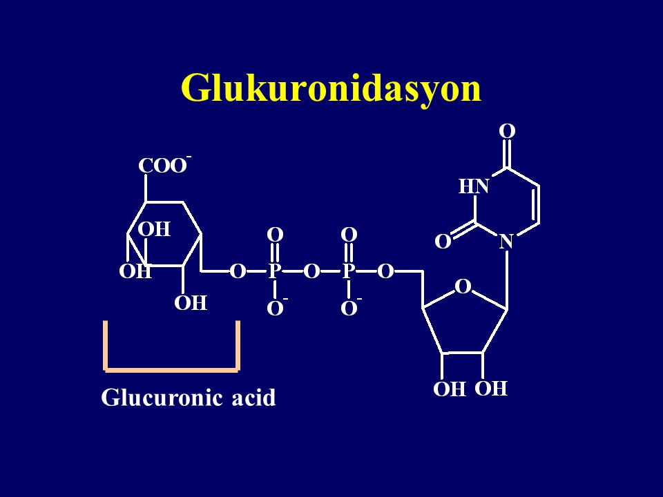 Glukuronidasyon Glucuronic acid