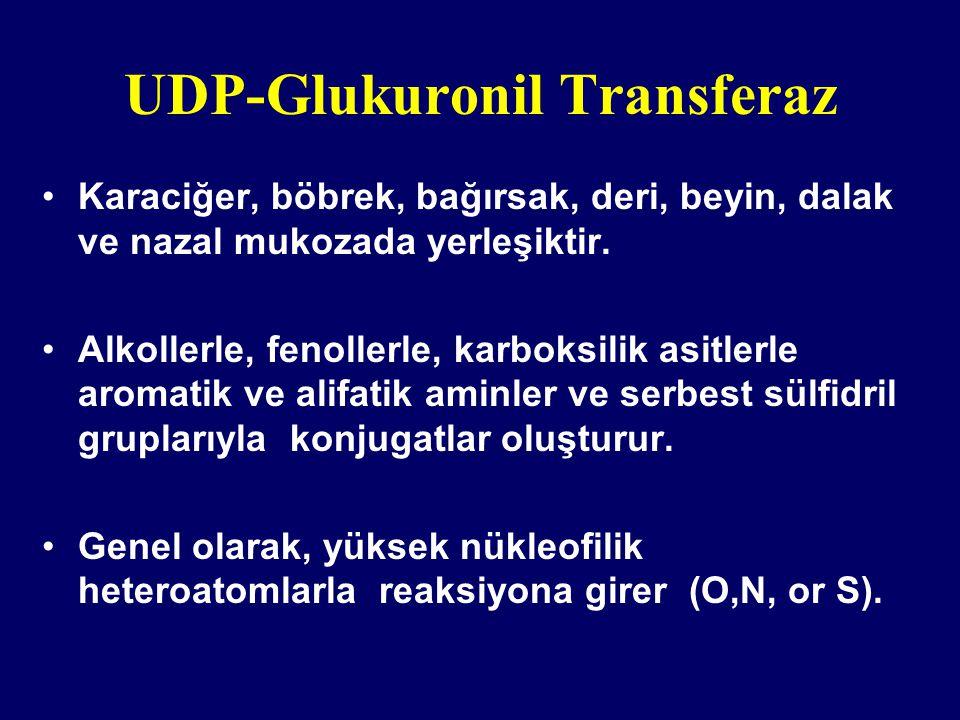 UDP-Glukuronil Transferaz