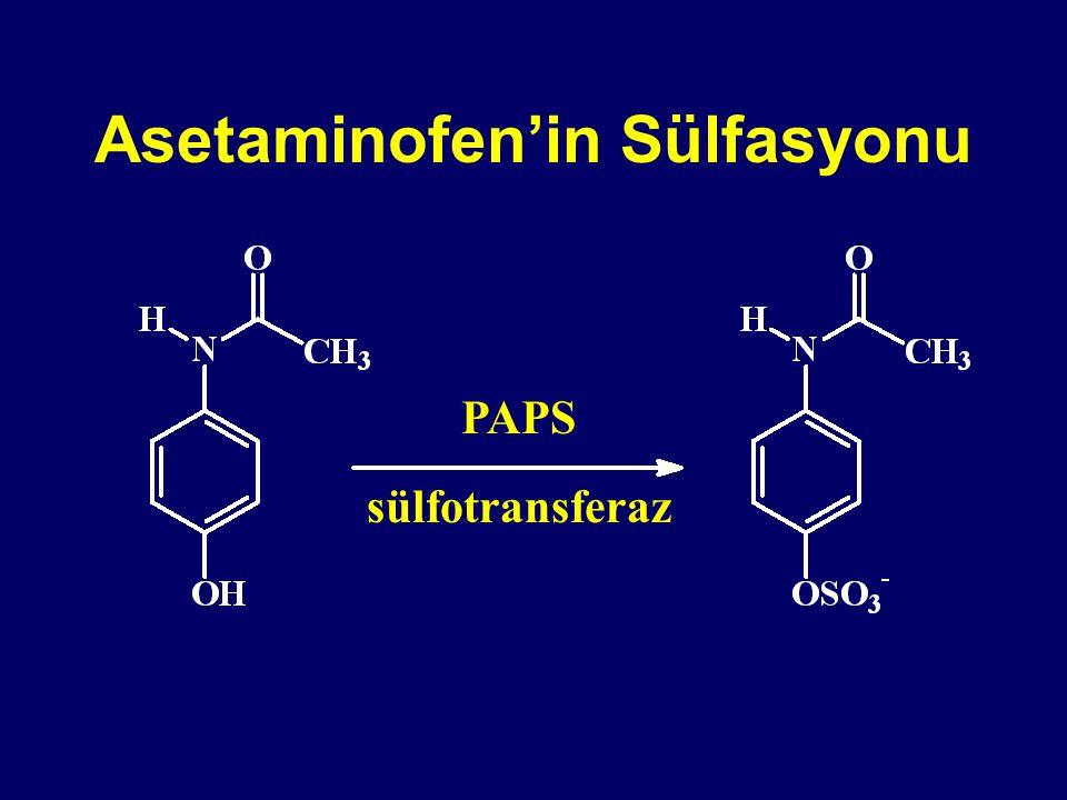 Asetaminofen'in Sülfasyonu