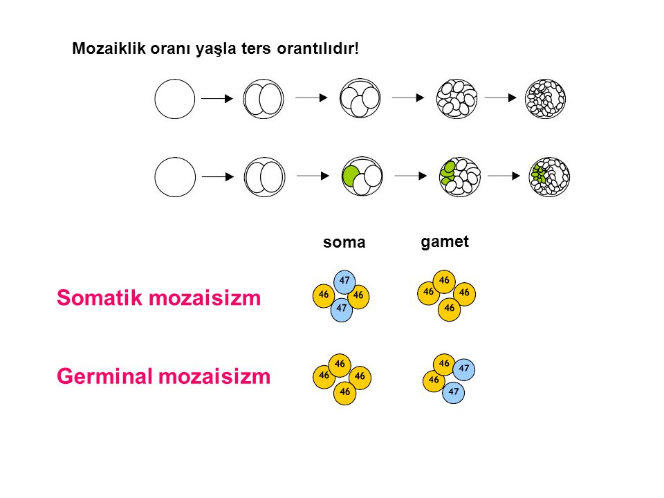Somatik mozaisizm Germinal mozaisizm