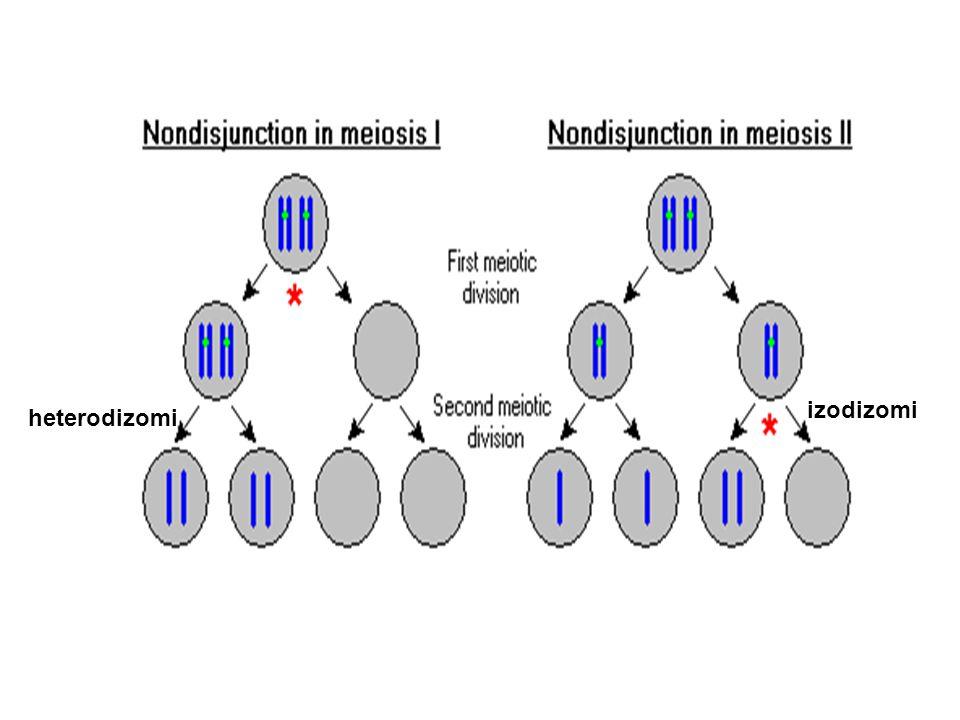 izodizomi heterodizomi