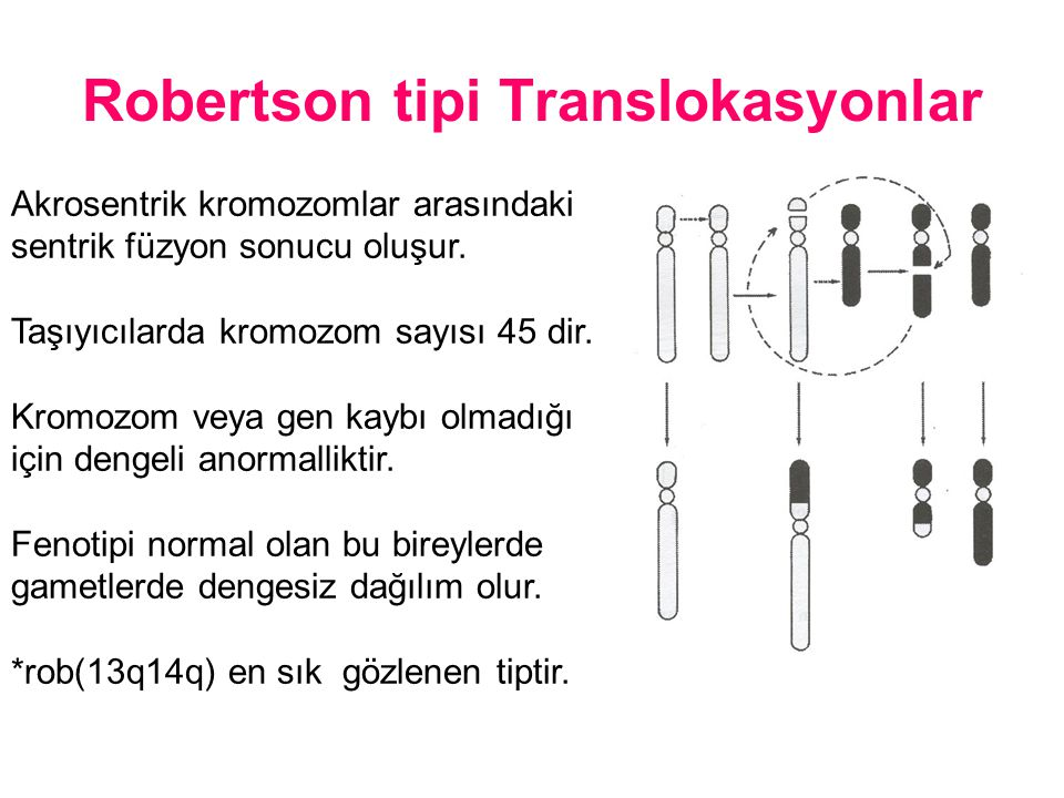 Robertson tipi Translokasyonlar