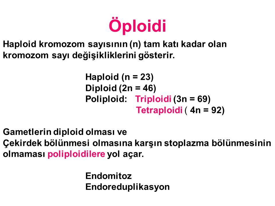 Öploidi Haploid kromozom sayısının (n) tam katı kadar olan kromozom sayı değişikliklerini gösterir.