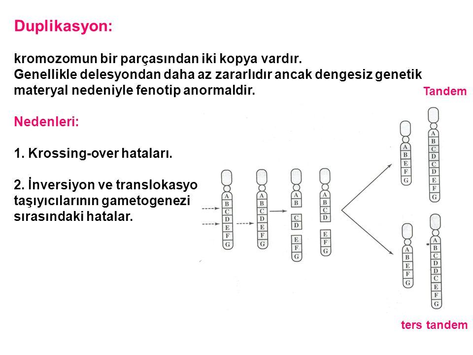 Duplikasyon: kromozomun bir parçasından iki kopya vardır.