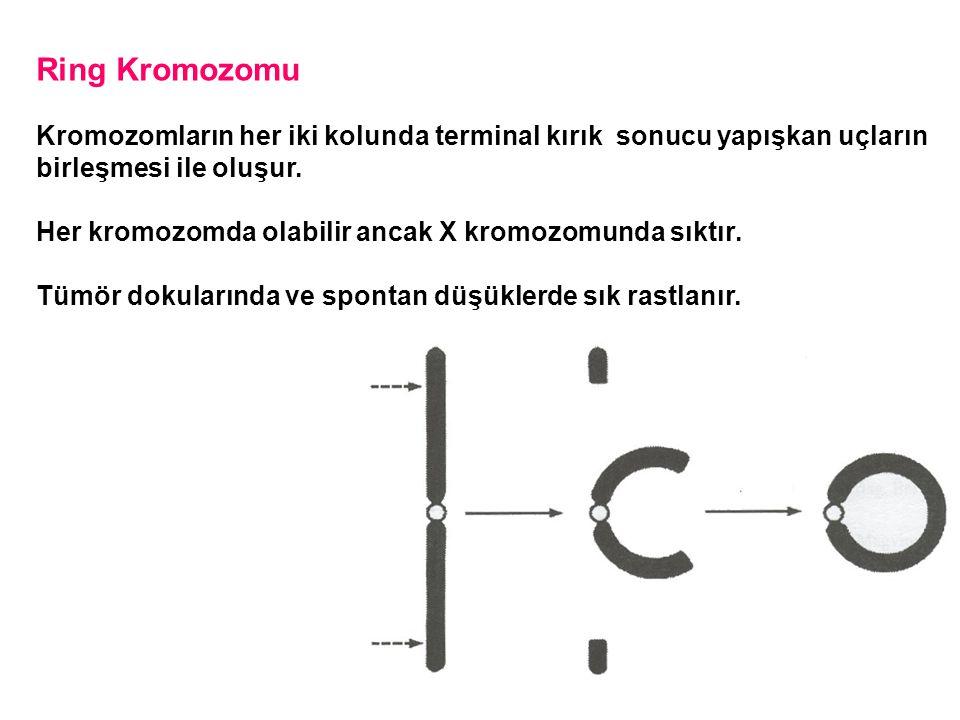 Ring Kromozomu Kromozomların her iki kolunda terminal kırık sonucu yapışkan uçların. birleşmesi ile oluşur.