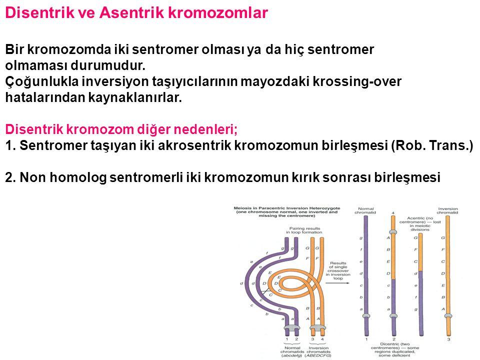 Disentrik ve Asentrik kromozomlar
