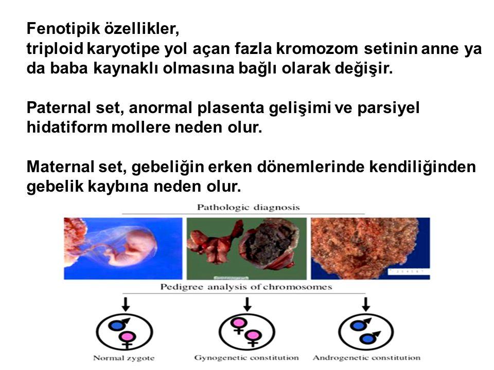 Fenotipik özellikler, triploid karyotipe yol açan fazla kromozom setinin anne ya da baba kaynaklı olmasına bağlı olarak değişir.