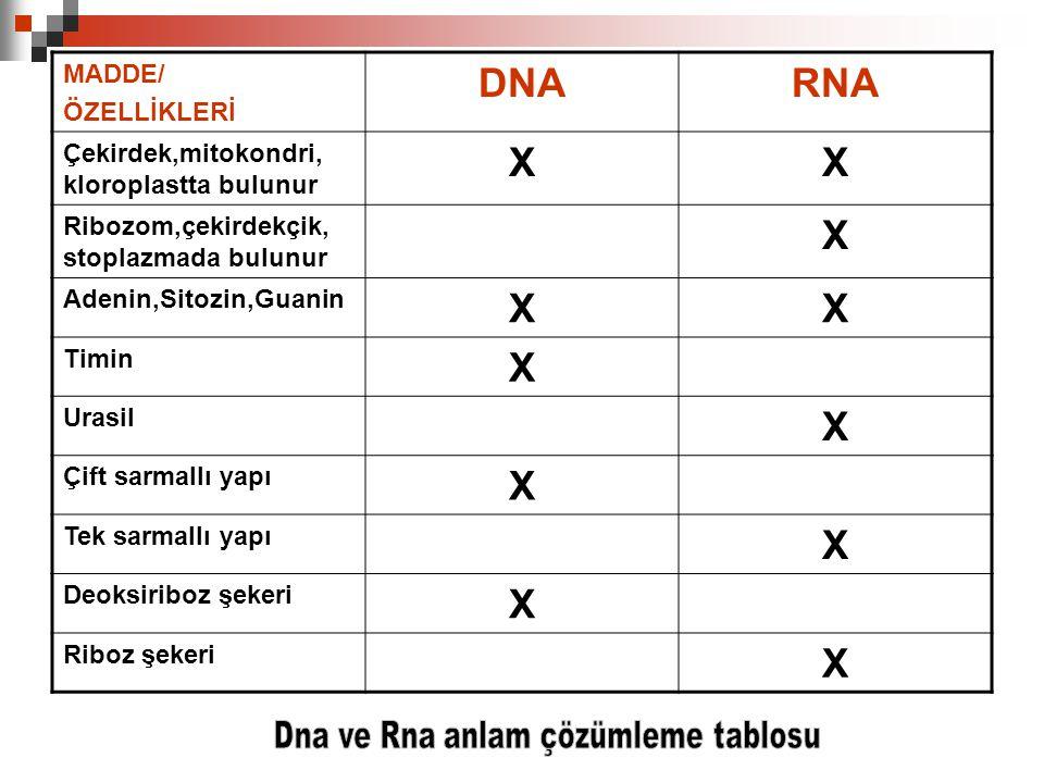 DNA RNA X MADDE/ ÖZELLİKLERİ Çekirdek,mitokondri, kloroplastta bulunur
