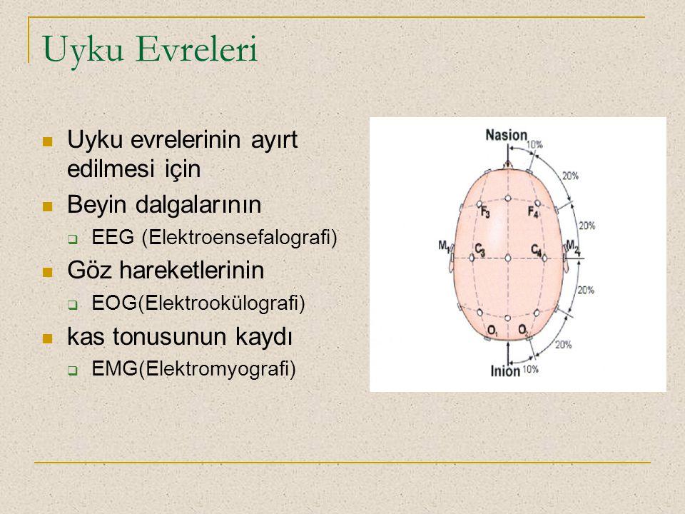 Uyku Evreleri Uyku evrelerinin ayırt edilmesi için Beyin dalgalarının