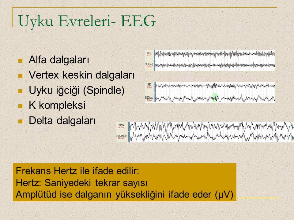 Uyku Evreleri- EEG Alfa dalgaları Vertex keskin dalgaları