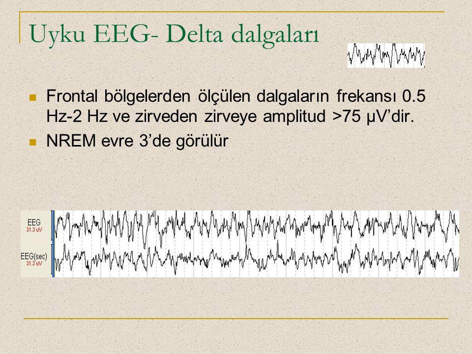 Uyku EEG- Delta dalgaları