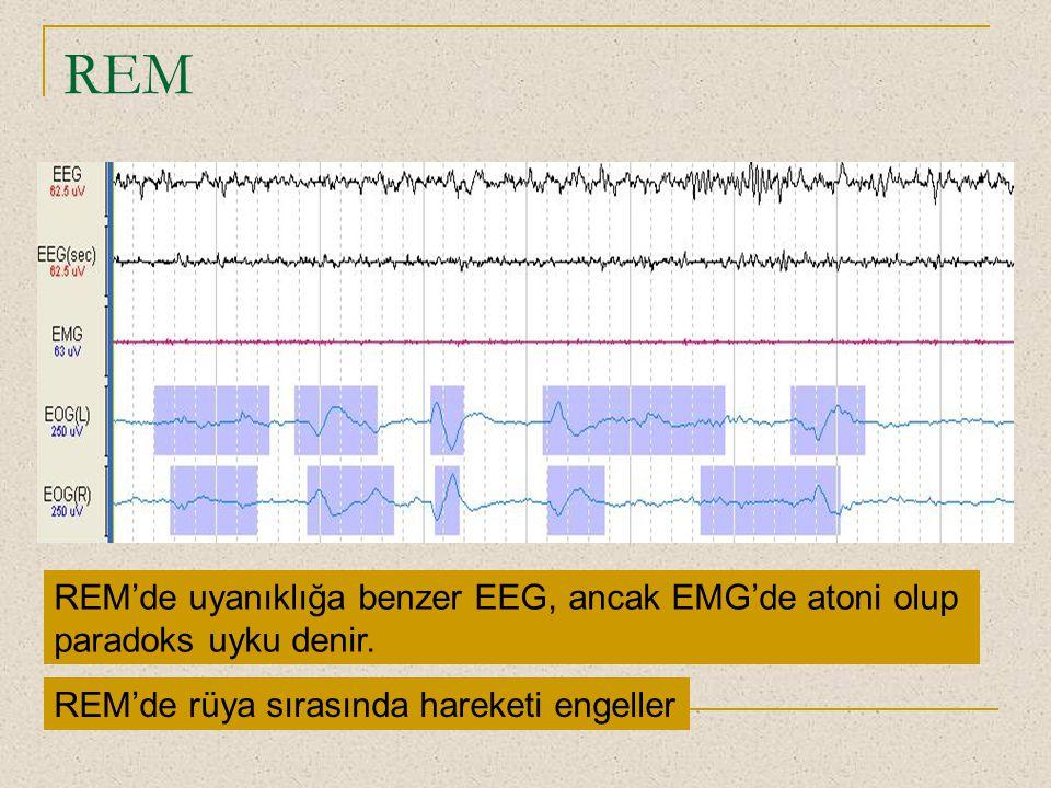 REM REM'de uyanıklığa benzer EEG, ancak EMG'de atoni olup