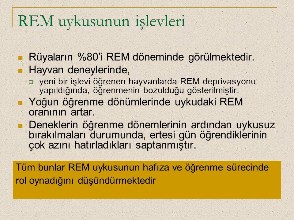 REM uykusunun işlevleri