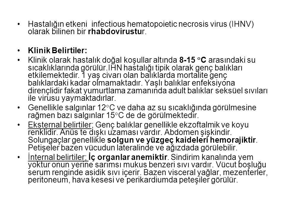 Hastalığın etkeni infectious hematopoietic necrosis virus (IHNV) olarak bilinen bir rhabdovirustur.