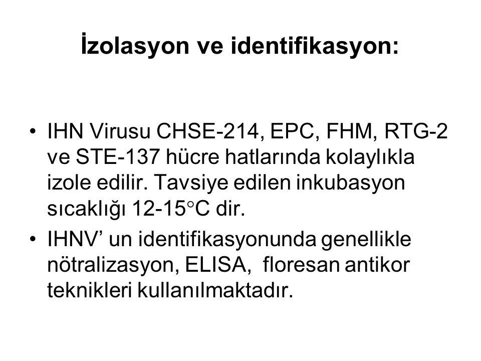 İzolasyon ve identifikasyon: